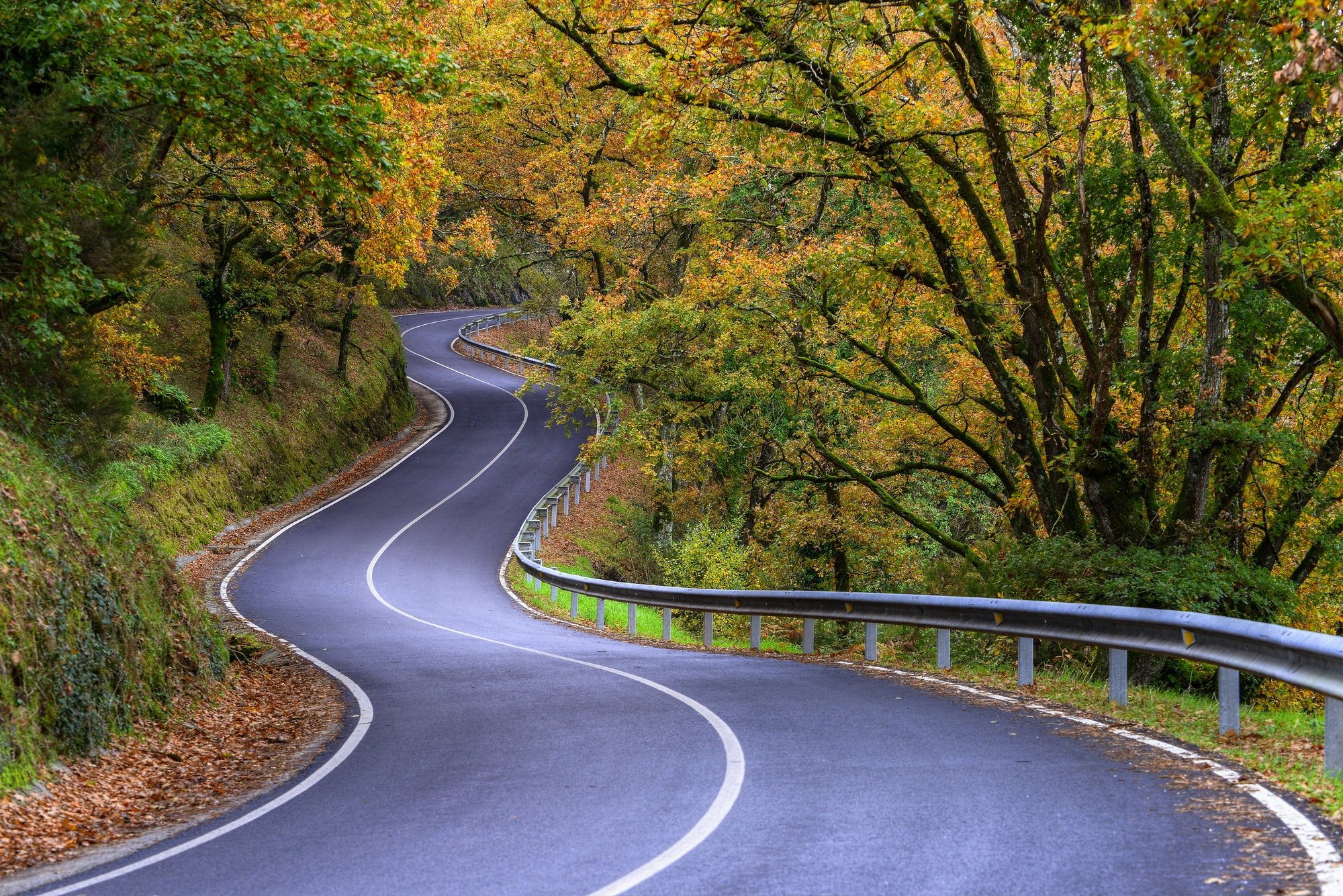 Curvy Road crosses a Lush Autumn Forest