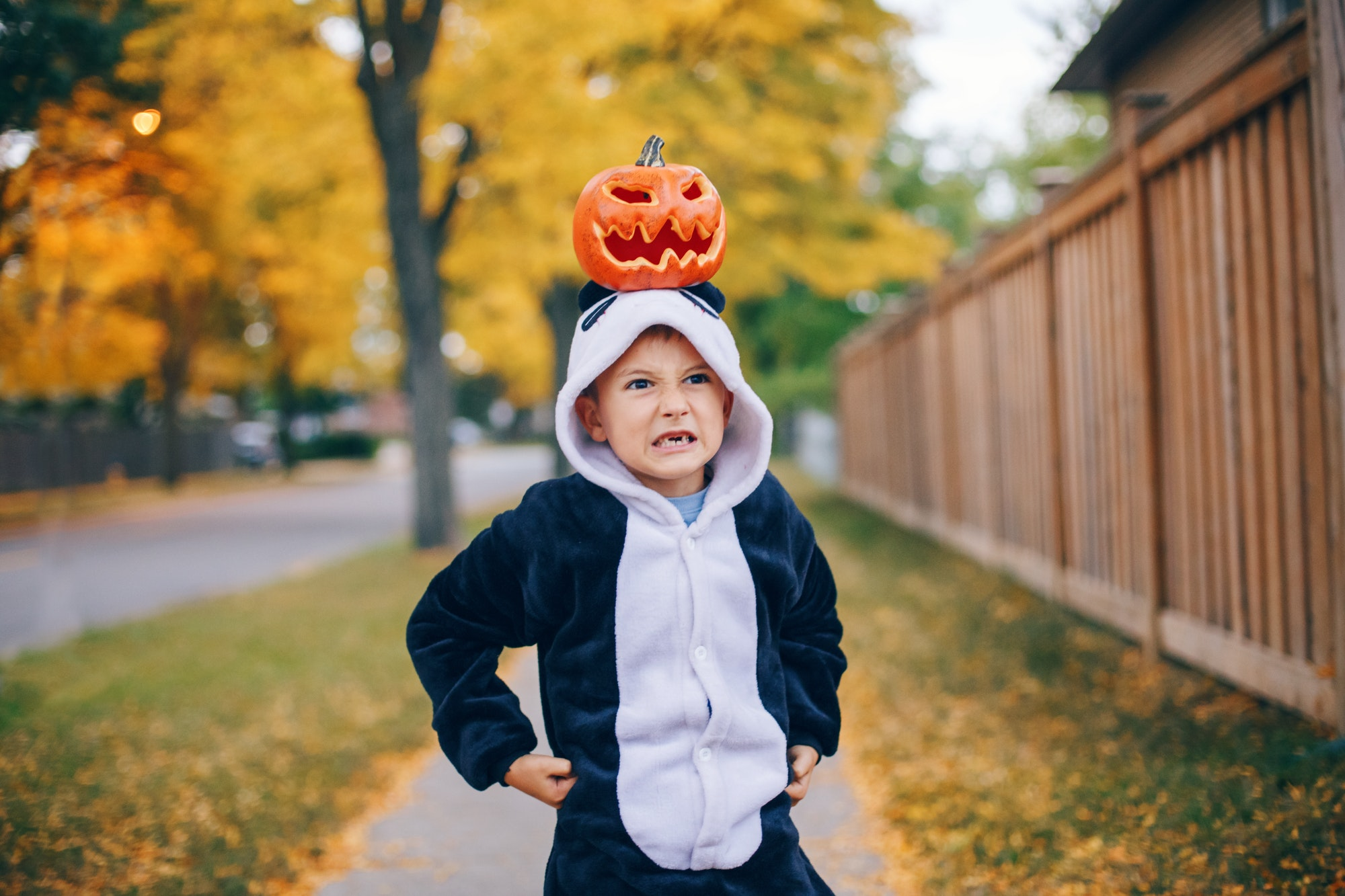 Grumpy angry mad boy in panda costume with red pumpkin on head. Kid child celebrating Halloween.
